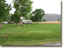 Lucerne Valley Campground